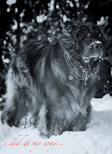 Photo: Foto animalsinmotion.ch
