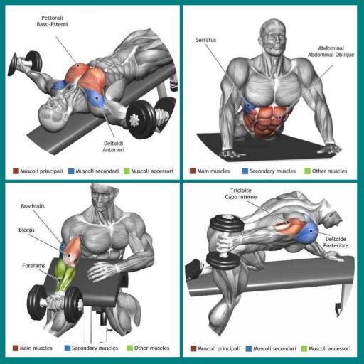 Tutorial Latihan Gym Membentuk Otot (app)