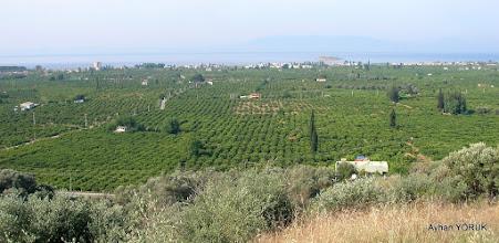 Photo: Gümüldür mandalin bahçeleri. EFES-MİMAS (İYON) YOLU 5. Etabı - 08.05.2016 (Değirmendere-Kolophon-Çamönü-Karacadağ-Tahtalı-Gümüldür Etabı)