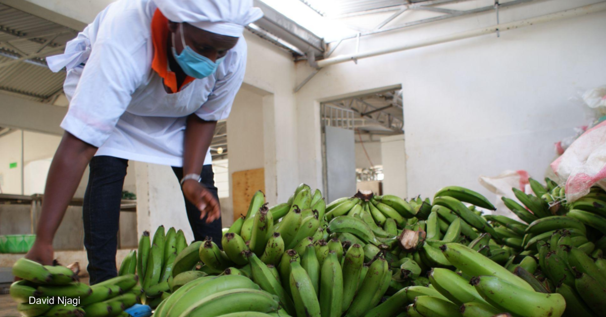 Kenya's attempt to boost agro-processing