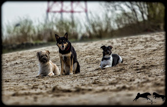 Photo: Copyright by M.F. Wer Fotos haben möchte bitte einfach bei mir melden. :)