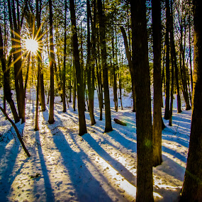 Morning Star by Christopher Burnett - Landscapes Forests ( northern white cedar, pwcsunbeams-dq, forest, sun rays )