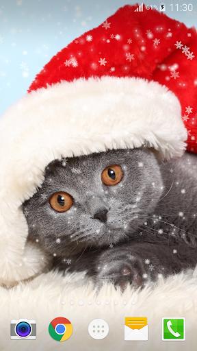 圣诞节猫动态壁纸