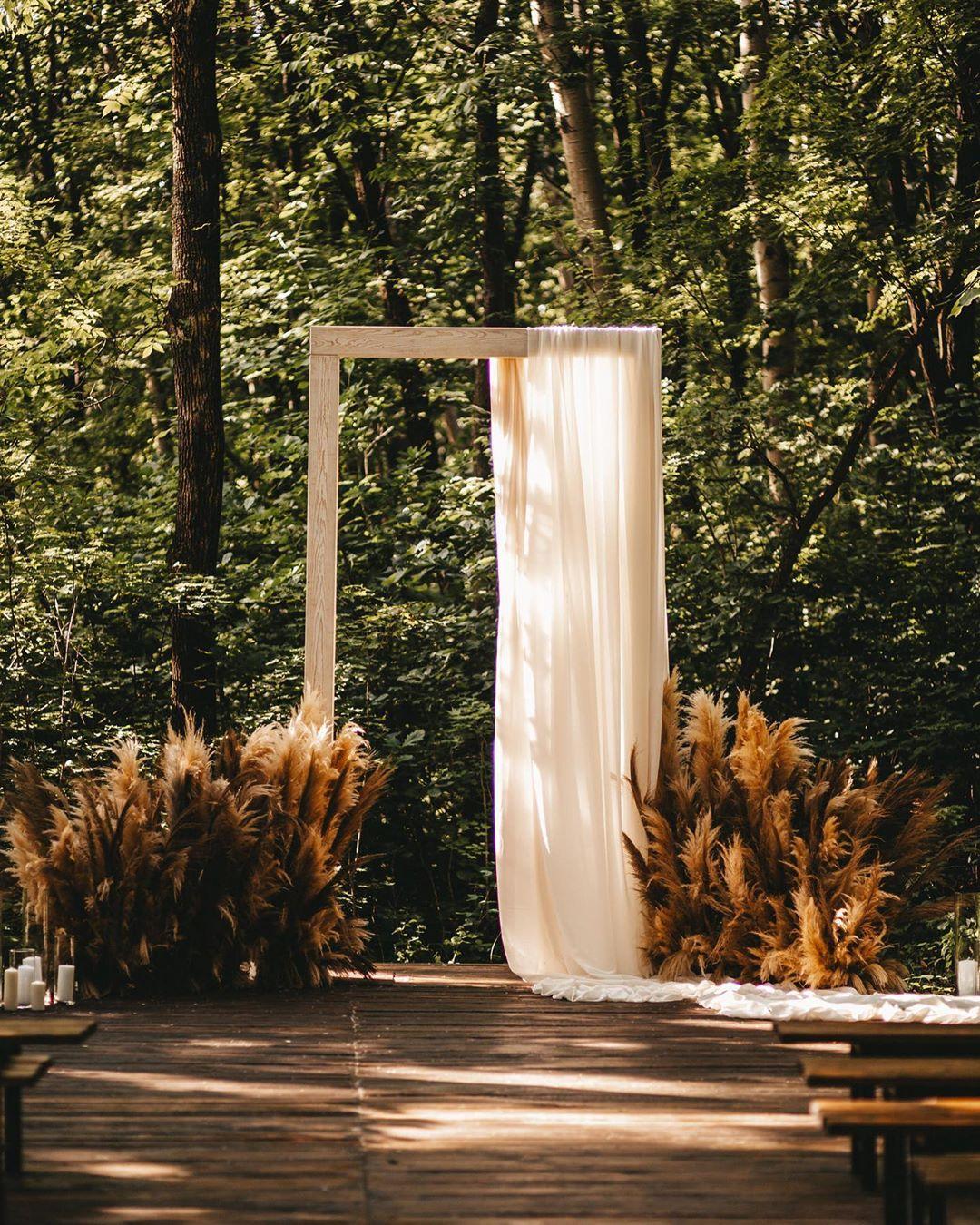 Лес и Лис в Хабаровске