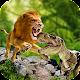 Ultimate Lion vs Dinosaur: Wild Adventure (game)