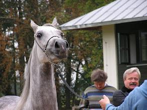 Photo: BA010145 Janow Podlaski - stadnina koni