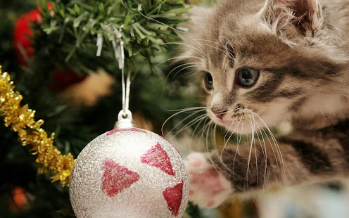 Pet Christmas Wallpaper HD- screenshot thumbnail