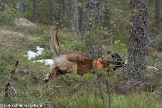 Photo: Azlan har funnet noen og kommer inn med melding!