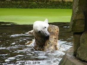 Photo: Entspanntes Spielen im Wasser :-)