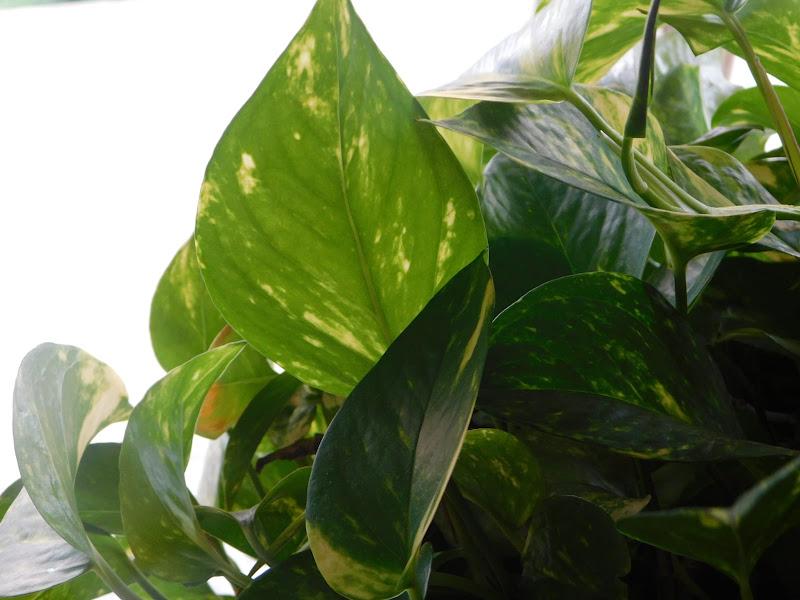 Sweet Green  di michela_follons
