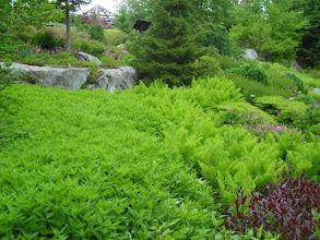 Photo: In Coastal Maine Botanical Gardens (http://www.mainegardens.org/)