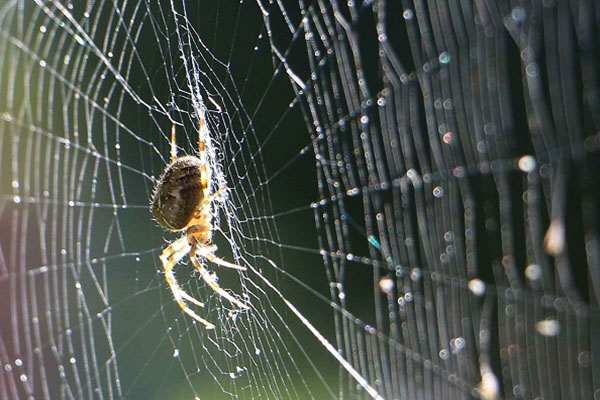 Mơ thấy nhện giăng tơ