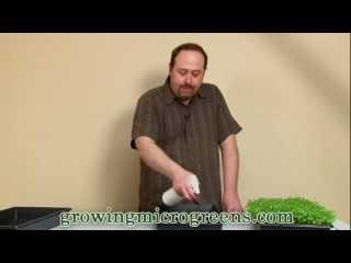 Video: Growing Microgreens - Hydroponic Method Part 1