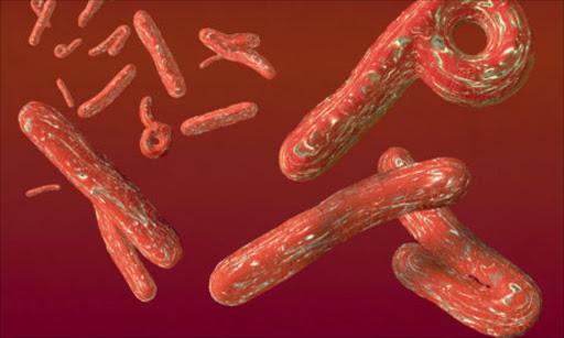 Ebola virus. File photo.