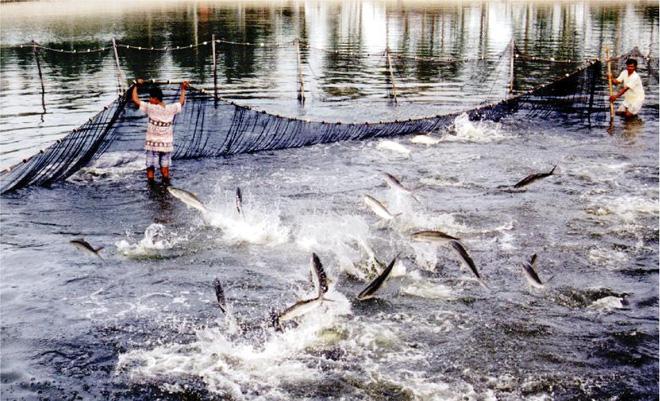 Công nghệ 4.0 và những bước ngoặt trong nuôi trồng thủy sản