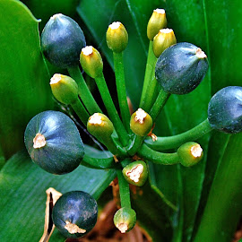SPRING BUDS by Wojtylak Maria - Nature Up Close Other plants ( rhododendron, green, bush, buds, spring,  )