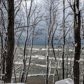 Winter beach at Hagar Shores by Jennifer Smusz - Landscapes Beaches ( #hagarshores, #snowy, #snowcoveredtrees, #winter, #trees, #snowybeach, #michigan, #beach, #boardwalk )