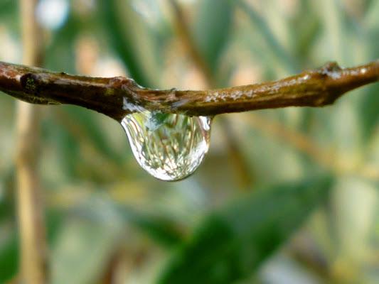 Riflessi dopo la pioggia... di scodi2