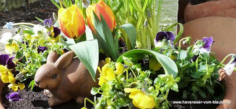 Photo: aber es wird auch irgendwann Ostern und Frühling....machen wir uns auf die Reise durch das Gartenjahr 2013