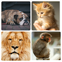 Animal Sounds - App for kids icon