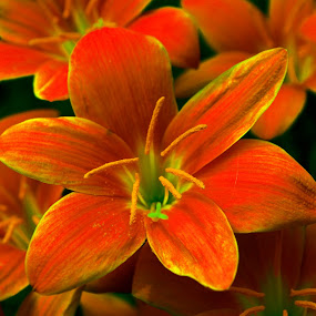 Wild Flowers by Sanjeev Leihao - Nature Up Close Flowers - 2011-2013
