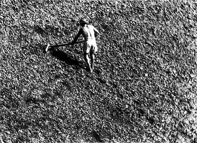 Lavoro nei campi di Eraldo Taioli