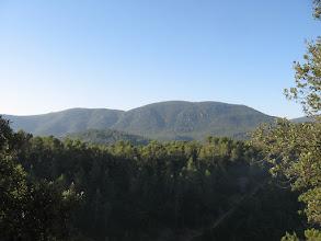 Photo: La forêt provençale