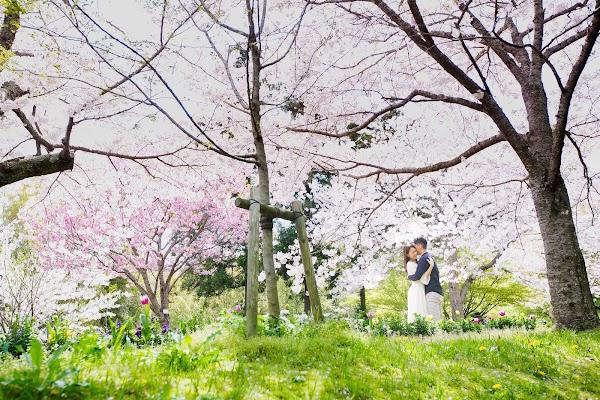 Wedding photographer Kenichi Morinaga (morinaga). Photo of 14.04.2017