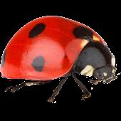 Base Jumping Ladybug