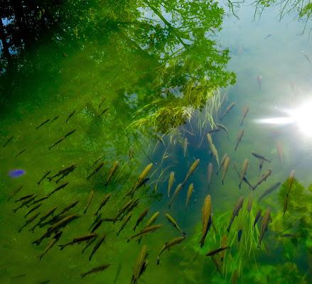 trasparenze di alberi e pesci di mariellaturlon
