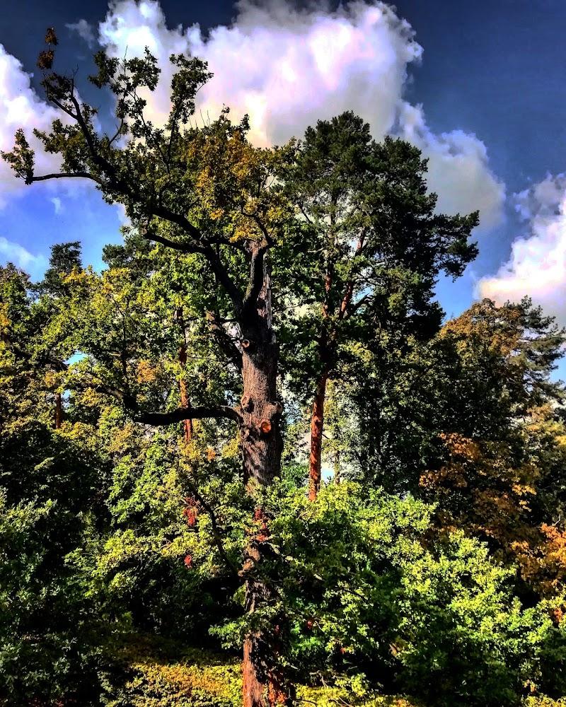L'albero... Fonte di vita  di Greta28