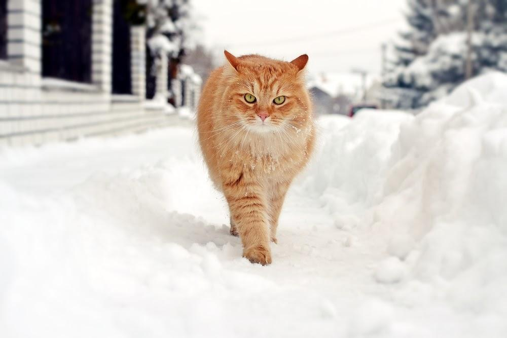 A cat running through the snow  Description automatically generated with medium confidence