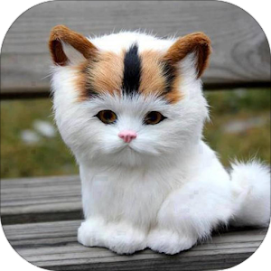 download Kitten Sounds apk