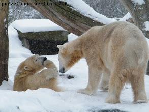 Photo: Knut kommt schauen und staunt ;-)