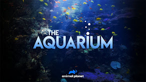The Aquarium thumbnail