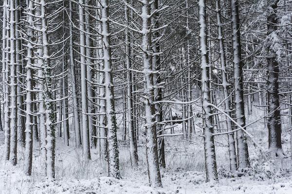 Presenze invernali di Podista