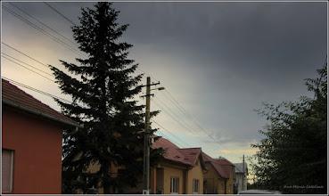 Photo: Conifer - de pe Str. Putna - 2017.08.27