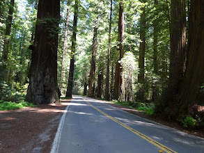 Photo: Avenue of the Giants road