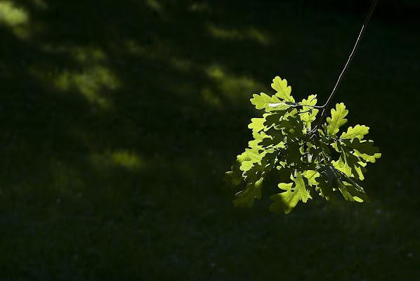 L'albero della saggezza di mariarosa-bc