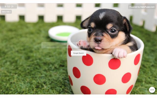 Puppy Wallpaper - Cute Puppy Backgrounds