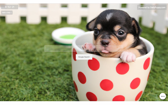 Puppy Wallpaper - Cute Puppy Backgrounds