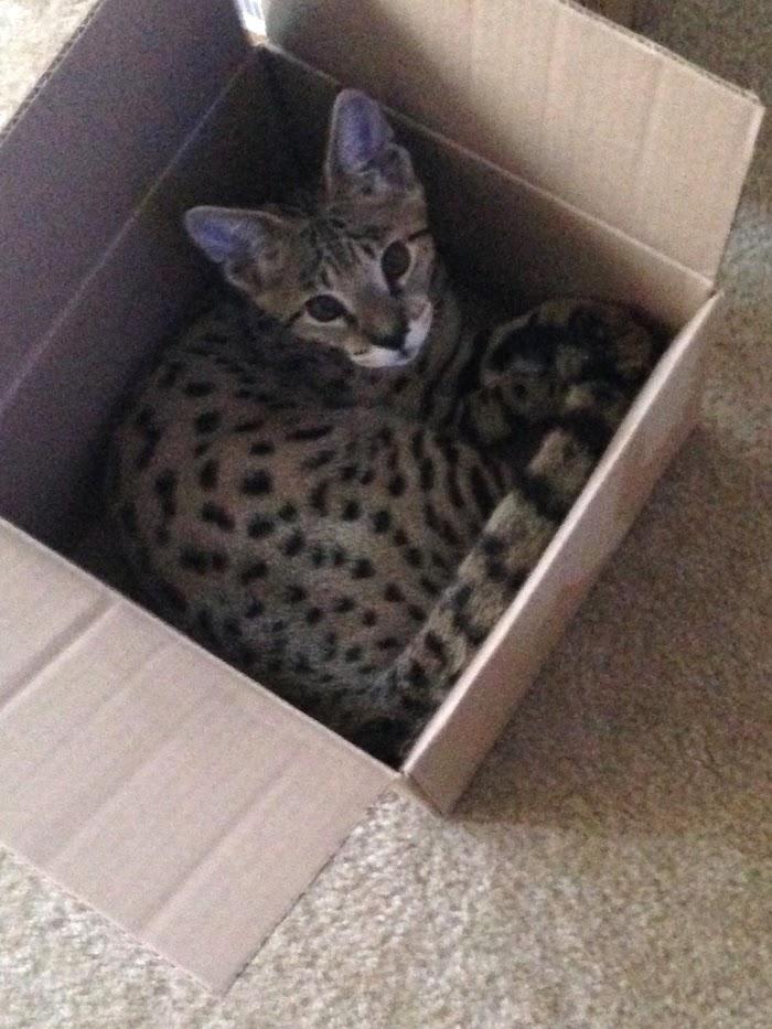 Sunny in a box