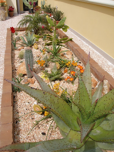 Progetto giardino e irrigazione pagina 2 forum for Aiuole con piante grasse