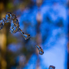curved water drops 2 by Mehdi Laraqui - Nature Up Close Water ( water, water drops, tap water, nature, space., levitaion, drink, drops, nature up close, forest, tap )