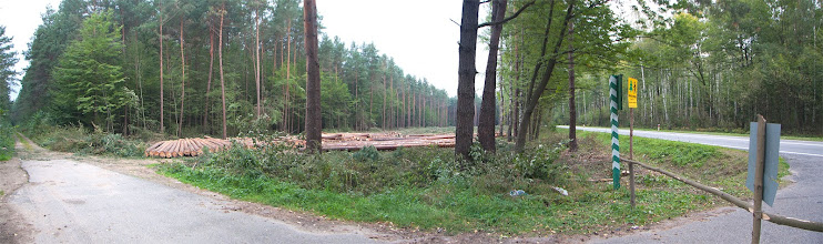 Photo: Wyrąb lasu pod budowę obwodnicy Stawisk.