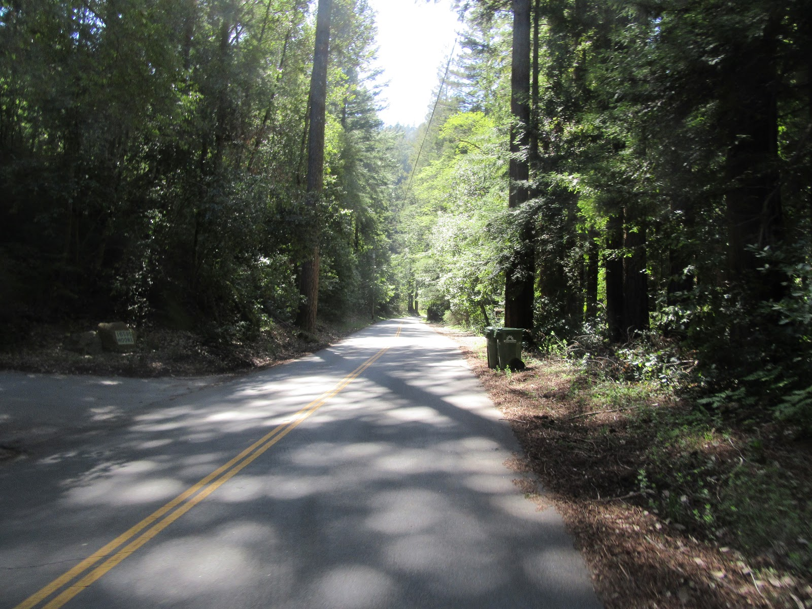Bicycle climb Jamison Road  - roadway surrounded by forest