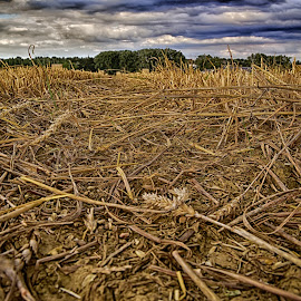 What Remains ! by Marco Bertamé - Landscapes Prairies, Meadows & Fields ( clouds, straw, harvest )