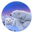 Polar Bear New Tab Page HD Wallpapers