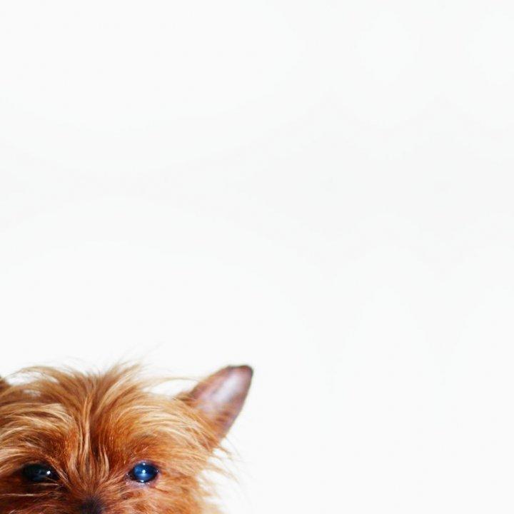 Canino dispettoso di danilo