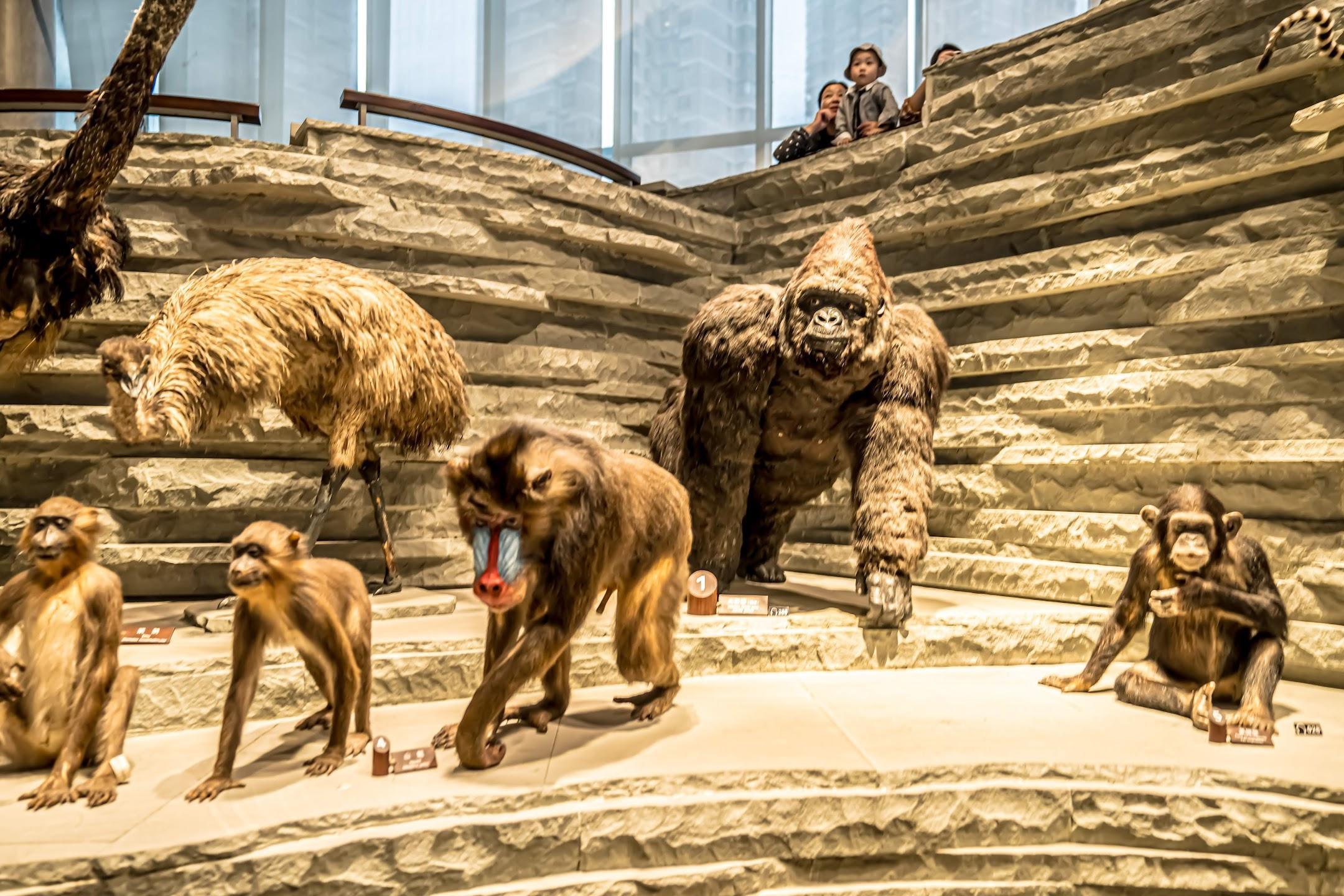 上海自然博物館3